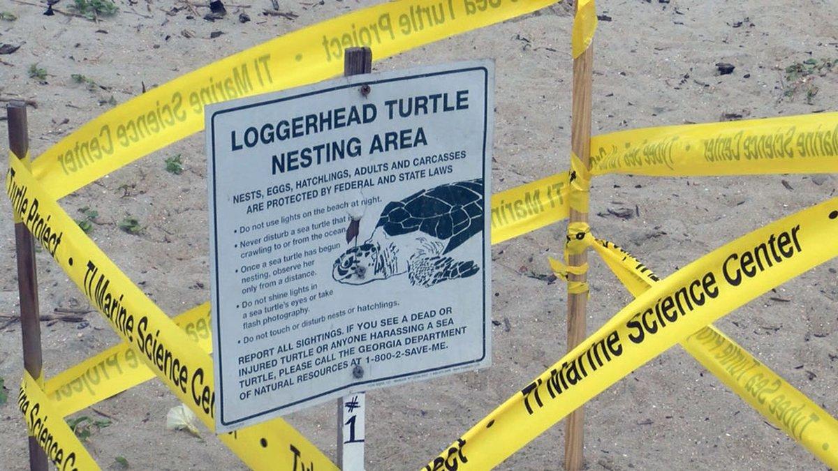 A sea turtle nest on Tybee Beach.