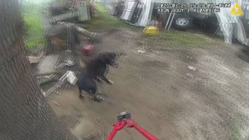 Two Candler County deputies rescued a family's two dogs from a fire Saturday afternoon.