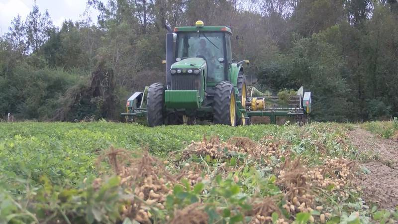 A fourth-generation farmer in Bulloch County tells us he prefers the challenges of farming to...