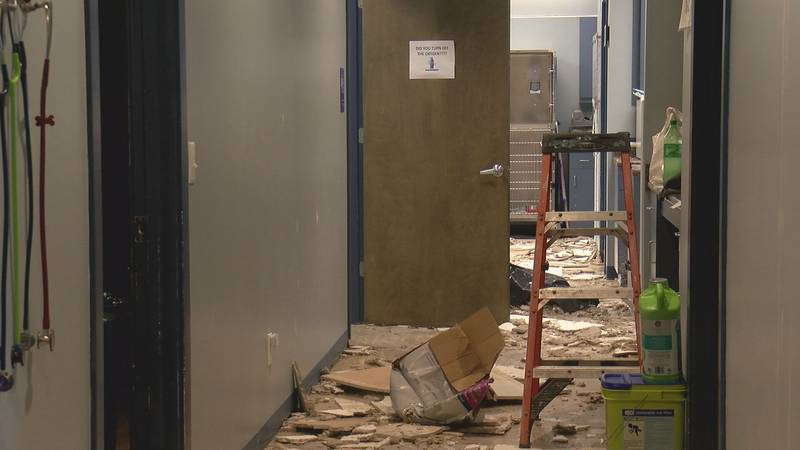 At least one tornado came through Port Royal overnight Wednesday. Now, Port Royal Veterinary...