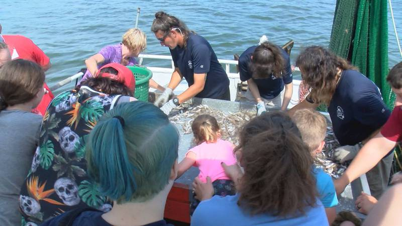 The Hilton Head shrimping industry has moved towards incorporating the island's growing tourism...