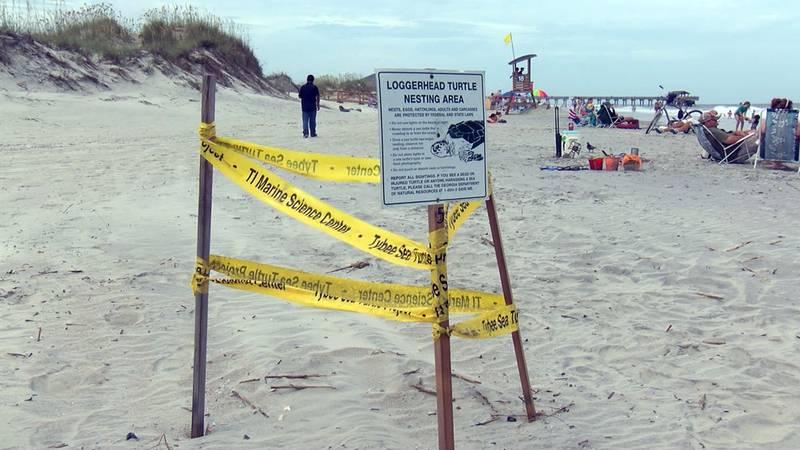 A Loggerhead sea turtle nesting area on Tybee Beach, Tybee Island, Ga. Photo source: WTOC.