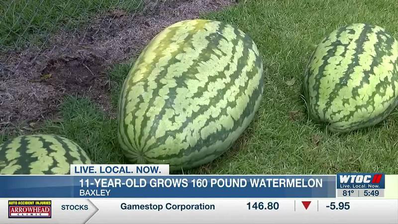 Baxley kid grows massive, state title winning watermelon