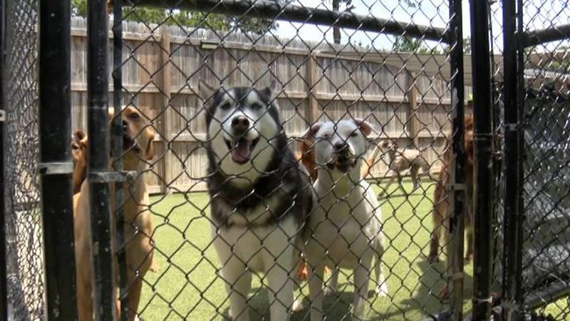Dogs at Von Trapp Pet Lodge