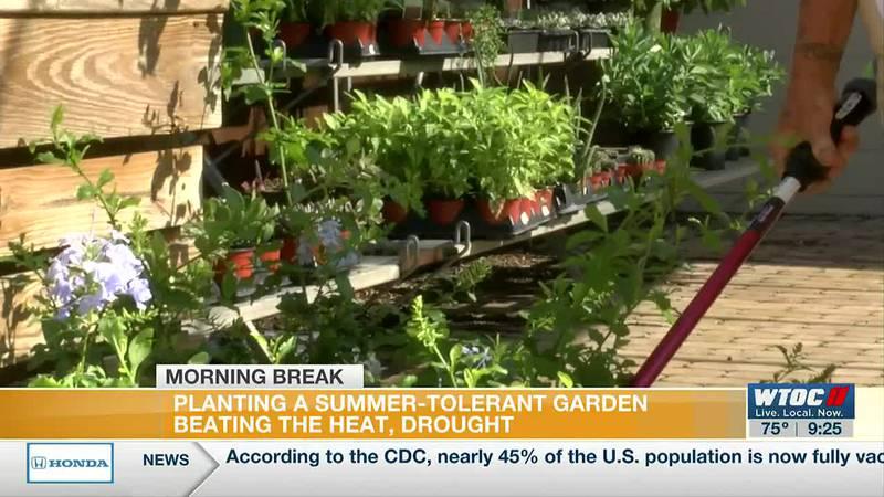 Planting a summer-tolerant garden