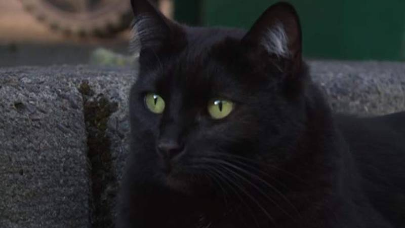 An Oregon woman says her cat Esme ramped up the number of masks, cloth and gloves she's taking...