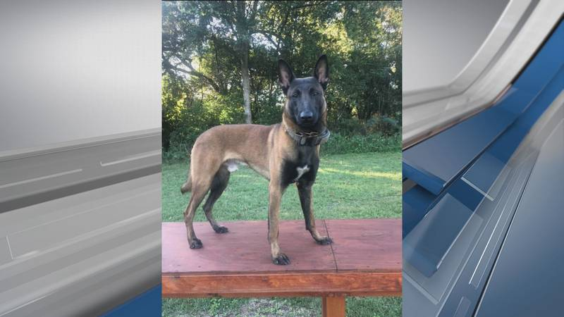 Savannah Police have announced the death of K-9 Jas, a 3-year-old Belgium Malinois.