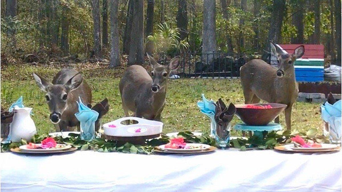 Deer picnic