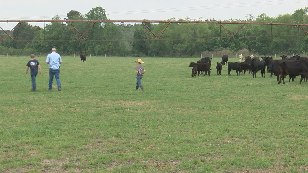 Jamie Tate is a fourth-generation farmer, but would love to pass on the family legacy to his...