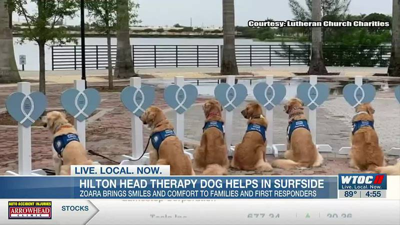 Hilton Head therapy dog helps in Surfside, Fla.