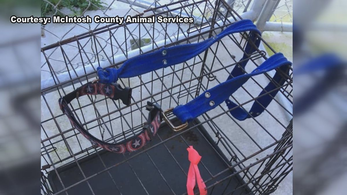 According to animal services, this is the crate and belt found on a mama dog walking along a...